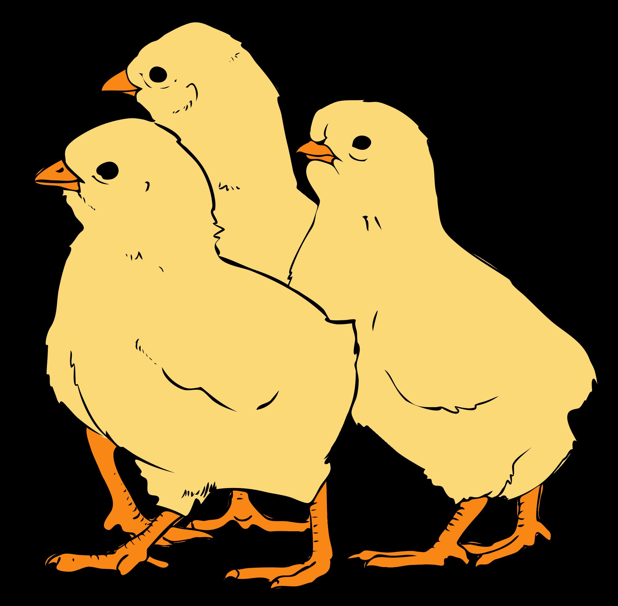 Chicks clipart #3