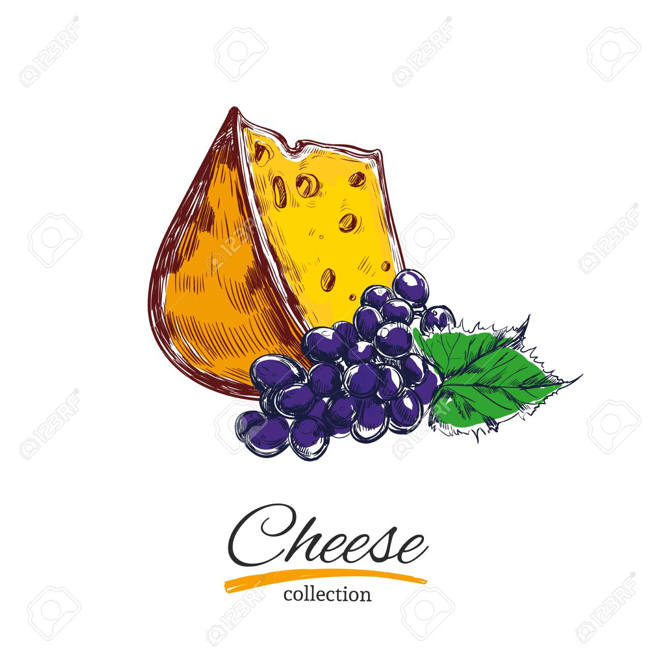 Cheese and grapes. Vector illustration. Colored objects on white...