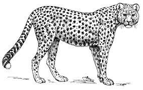 leopard clipart black and white.