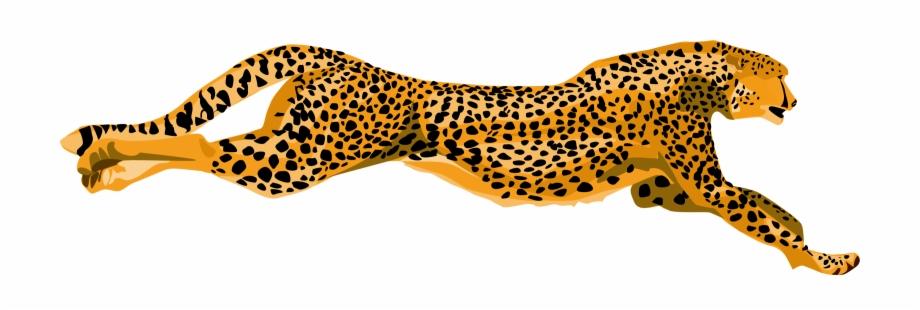 Cheetah Png.