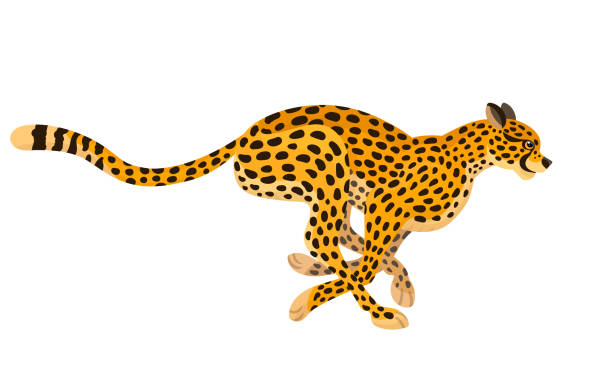 Best Cheetah Illustrations, Royalty.