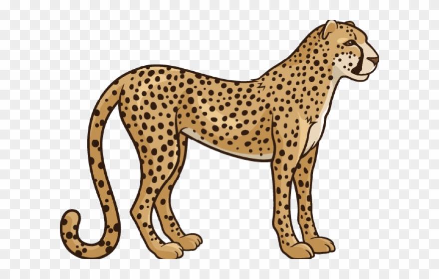 Realistic Clipart Cheetah.