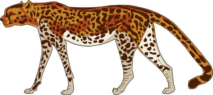 Cheetah clip art briansense.