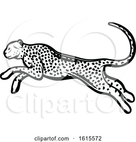 Clipart of a Black and White Cheetah.
