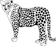 Cheetah black and white clipart » Clipart Station.