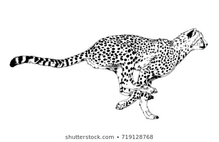 Cheetah Clipart Black And White (95+ images in Collection) Page 2.