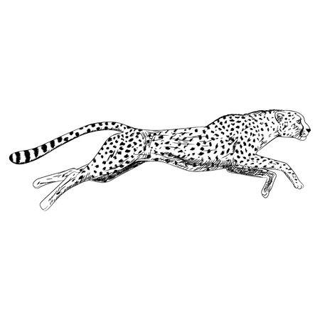 7,394 Cheetah Stock Illustrations, Cliparts And Royalty Free Cheetah.