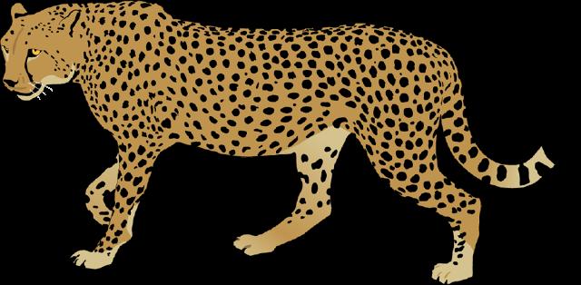 Cheetah Cub Clipart at GetDrawings.com.