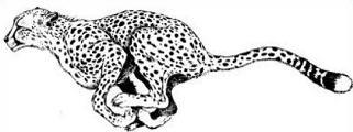 Free Cheetah Clipart.