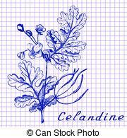 Chelidonium Clipart and Stock Illustrations. 14 Chelidonium vector.