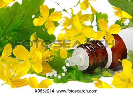 Stock Photo of Chelidonium for homeopathy k9657214.
