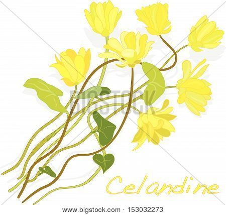 Chelidonium Vectors, Stock Photos & Illustrations.