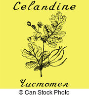 Chelidonium Clipart and Stock Illustrations. 14 Chelidonium vector.
