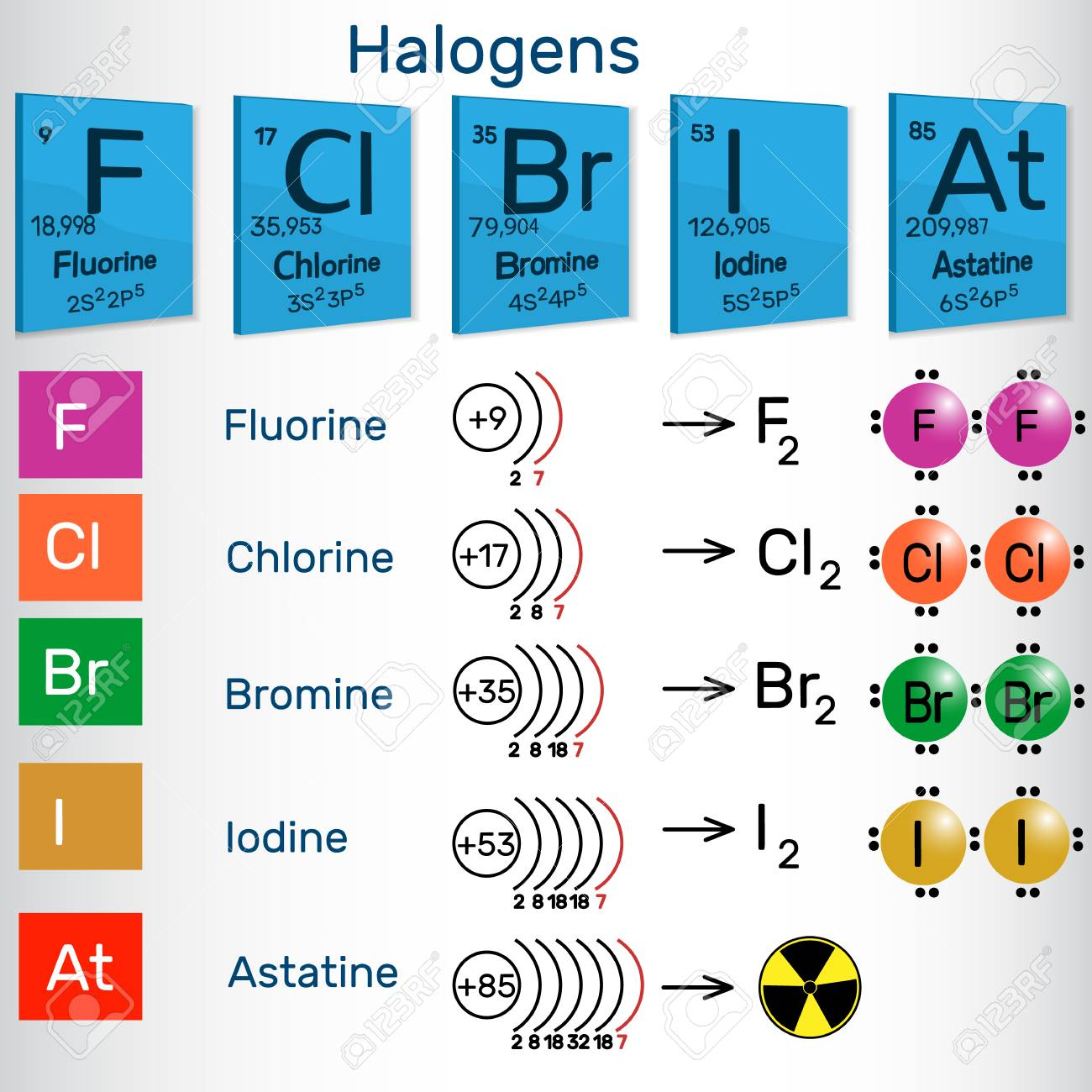 Halogens. Chemical elements of Periodic table. Vector illustration.