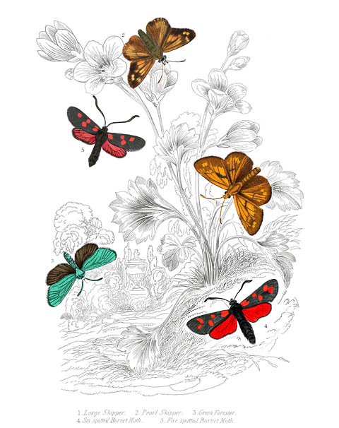 1000+ images about Insects from the Past on Pinterest.