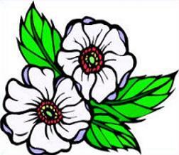 Free Cherokee Rose Clipart.
