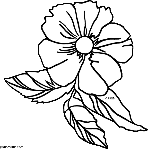 28 Collection Of Cherokee Rose Drawing.