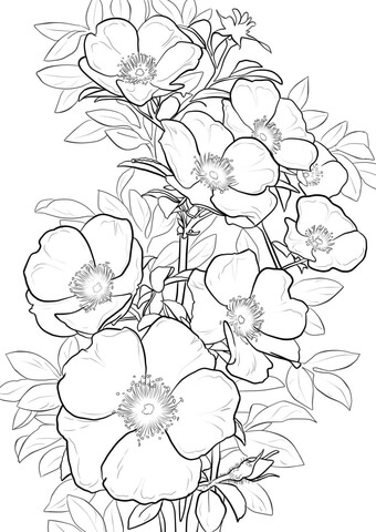 Cherokee Rose coloring page.