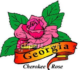 ga state flower.
