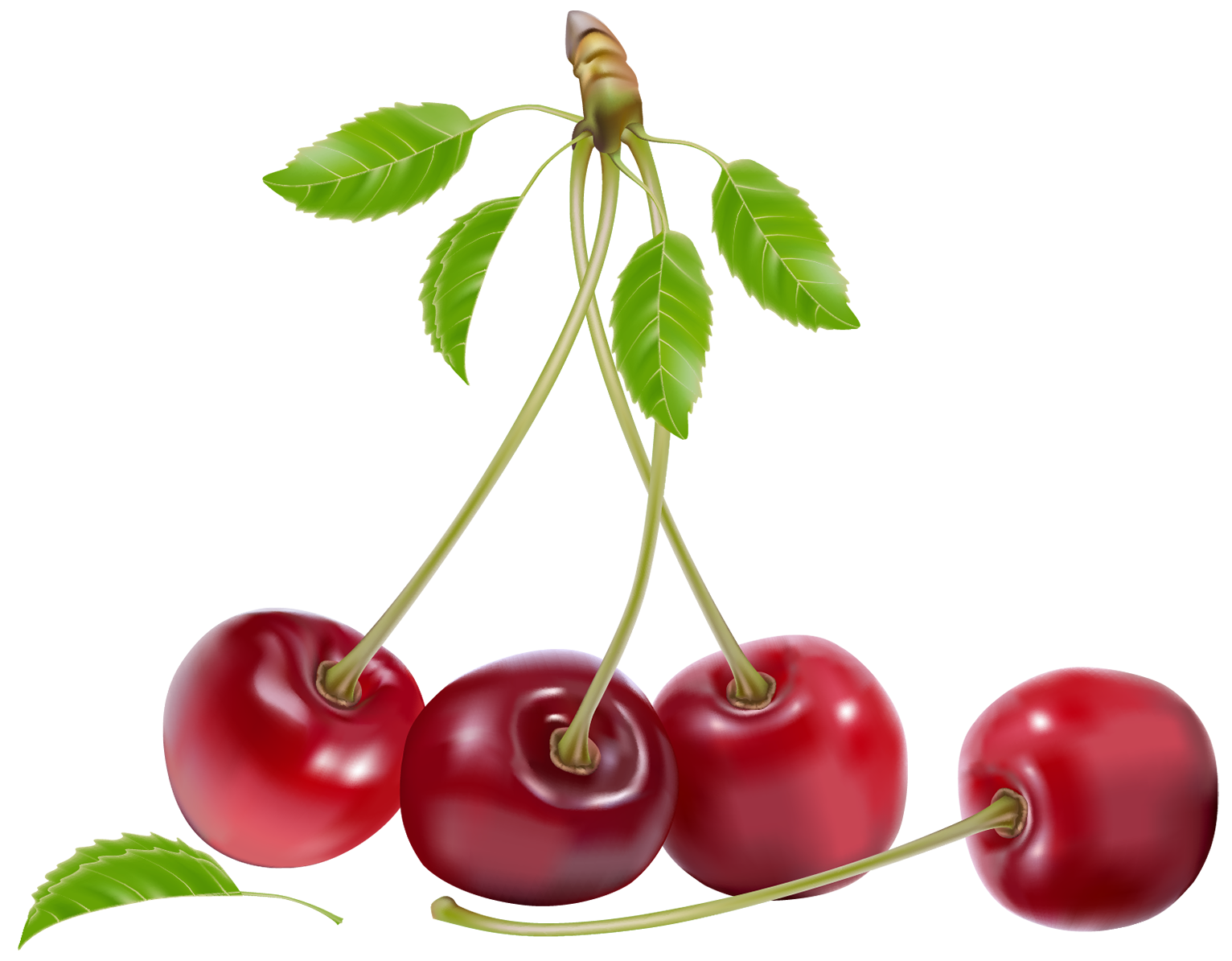 Cherries PNG Clipart.