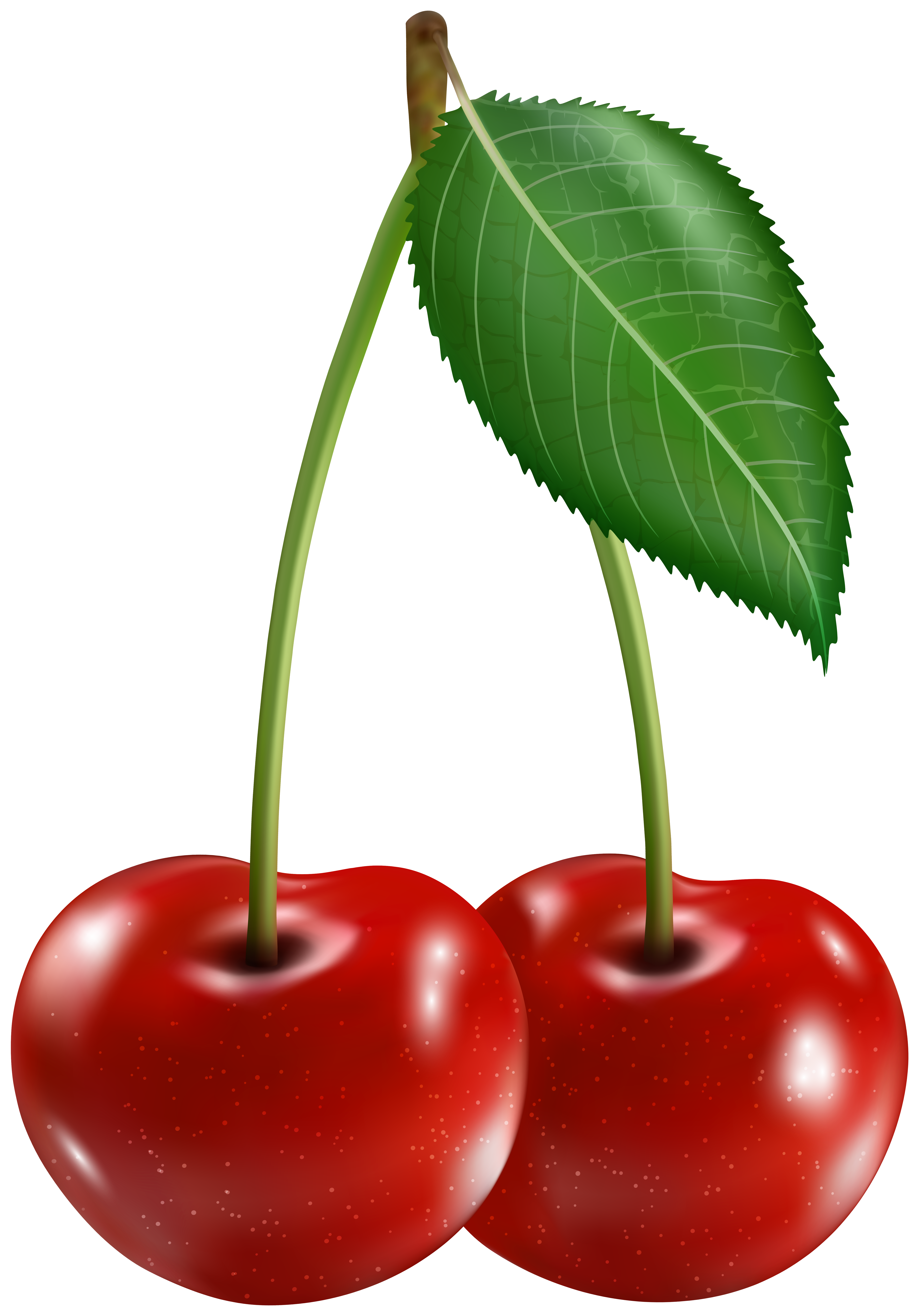Cherry Clipart Image.