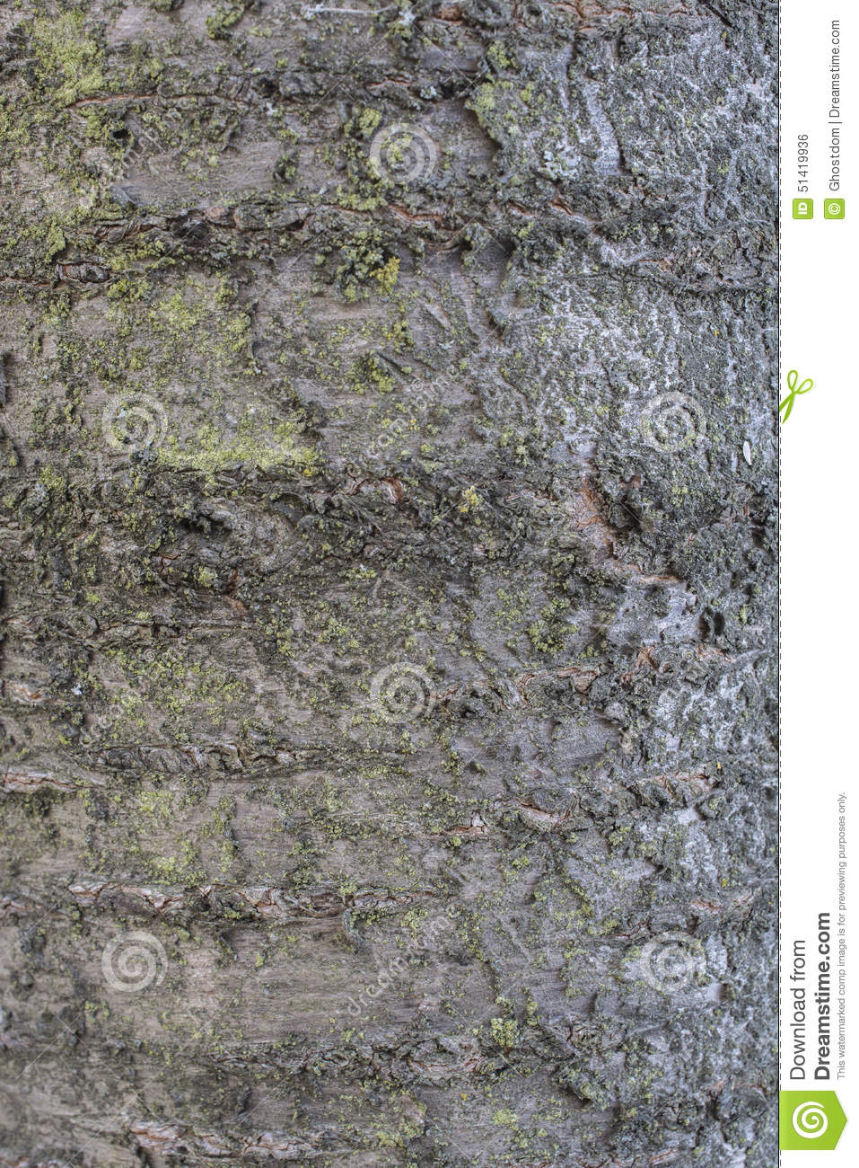 Cherry Tree Bark Stock Photo.