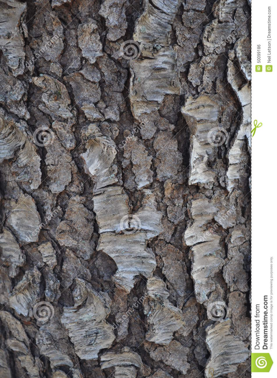 Black Cherry Bark Stock Photo.