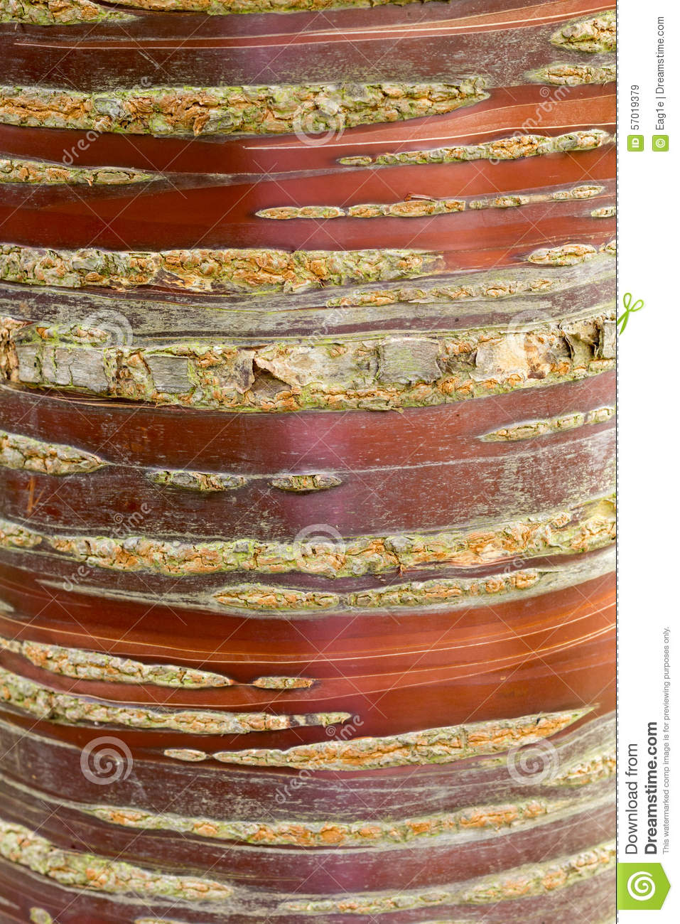 Cherry Bark Stock Photo.