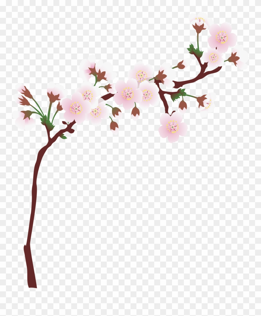 Graphic Library Download Branch Transparent Spring.