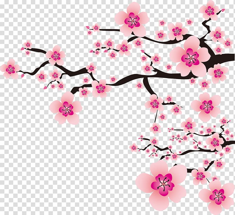 Plum blossom Flower , cherry blossom transparent background.