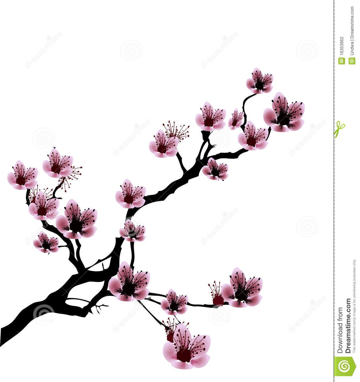 Black and White Cherry Blossom Drawings.
