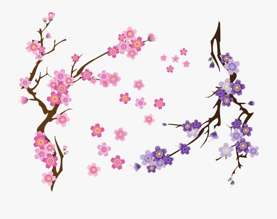 Cherry Blossom Drawing Clip Art.