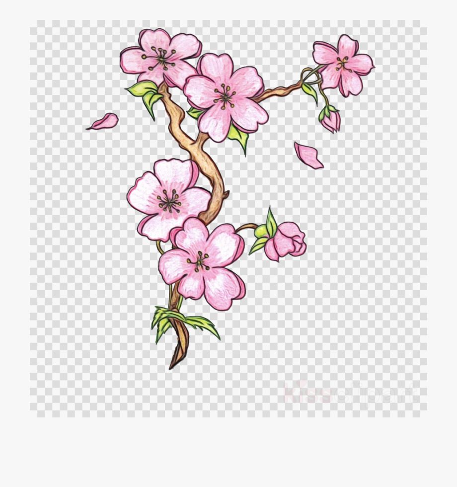 Cherry Blossom Cherry Blossom Clipart Drawing.