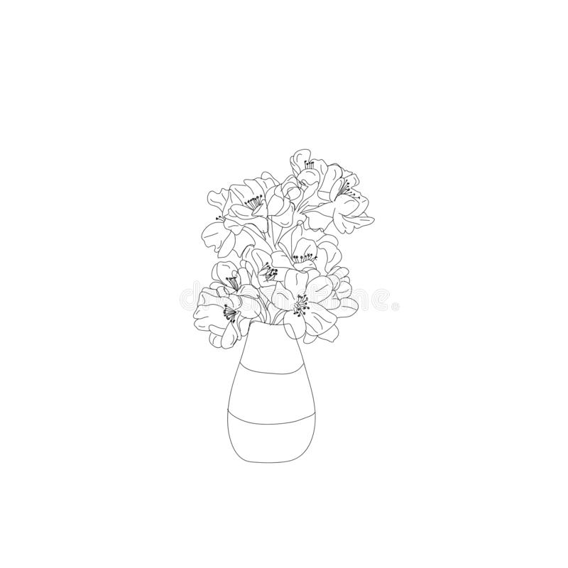 Cherry Blossom Drawing Stock Illustrations.