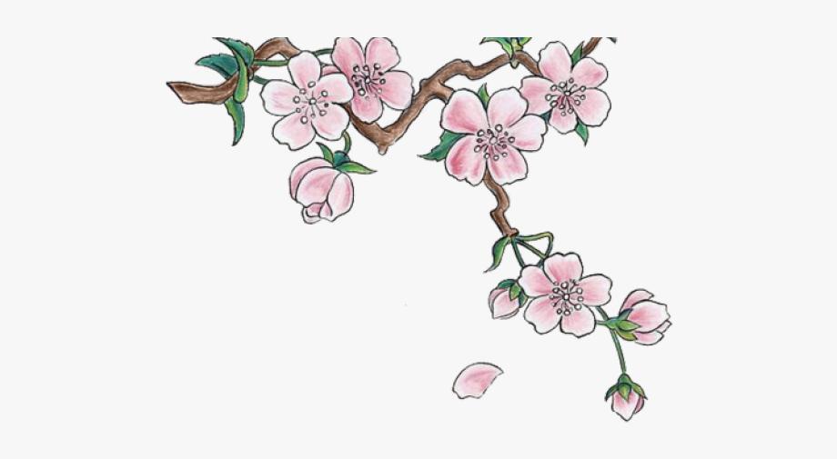 Cherry Blossom Clipart Transparent Tumblr.