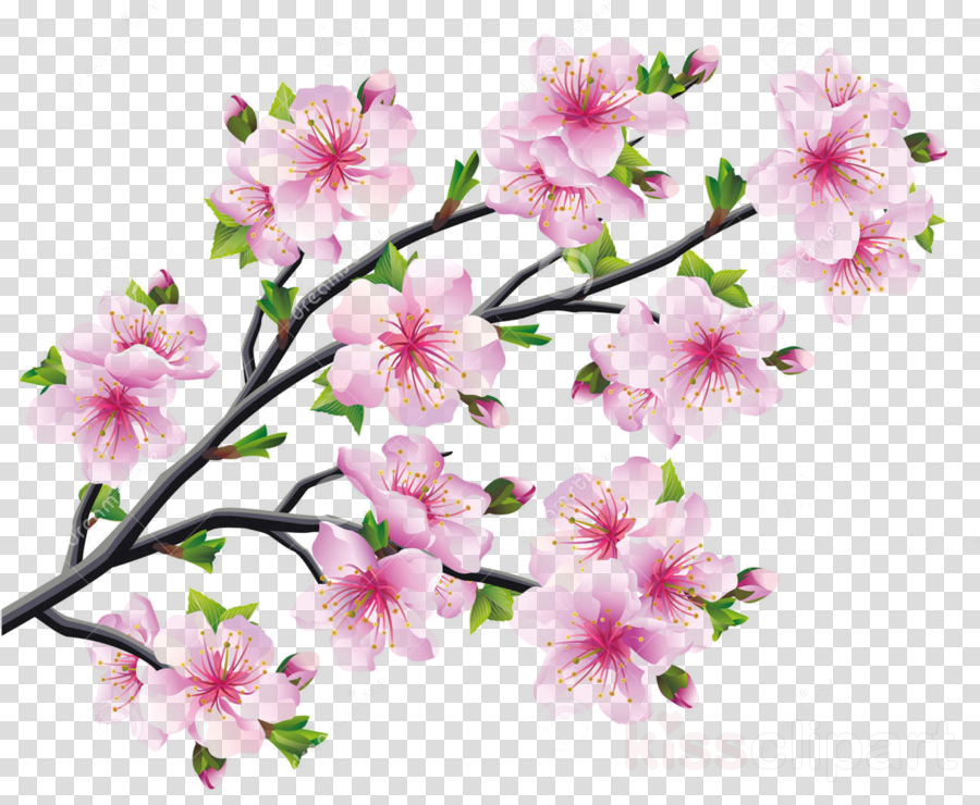 cherry blossom drawings clipart 10 free Cliparts ...