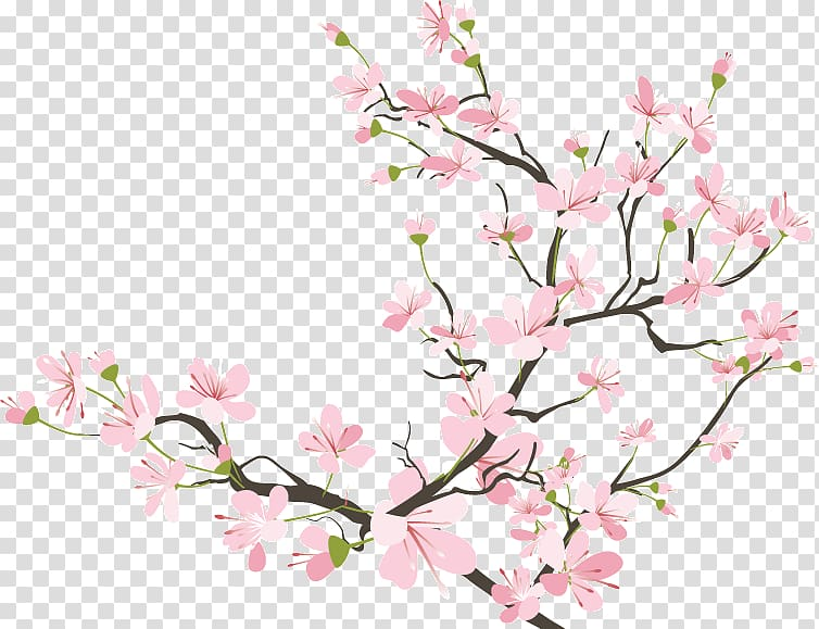 Cherry blossom Drawing, cherry blossom transparent.