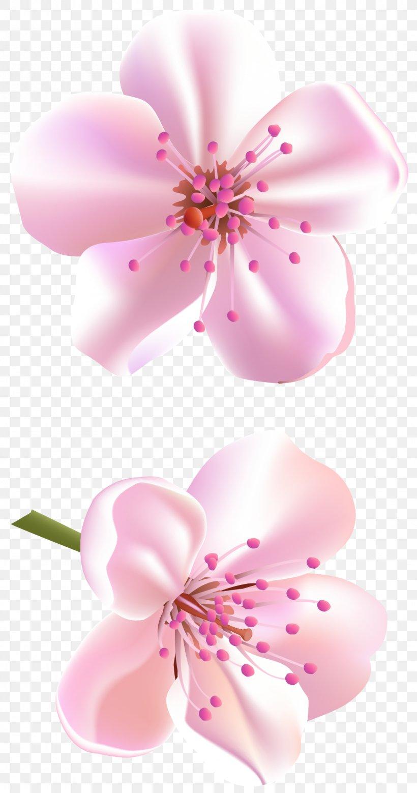 Flower Rose Pink Color, PNG, 1178x2241px, Flower, Blossom.