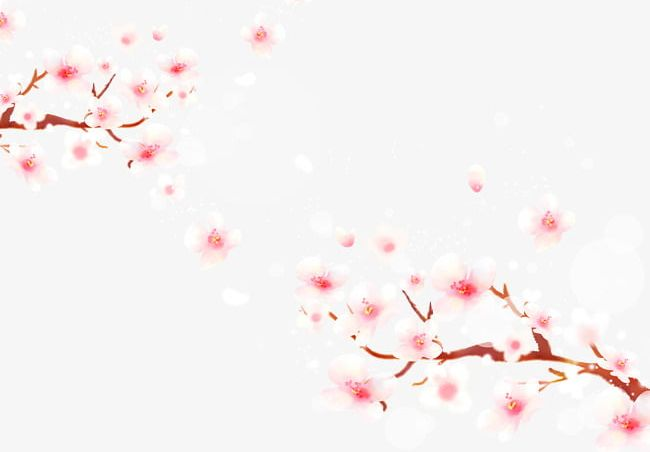 Cherry Blossoms Falling Material PNG, Clipart, Blossoms, Blossoms.