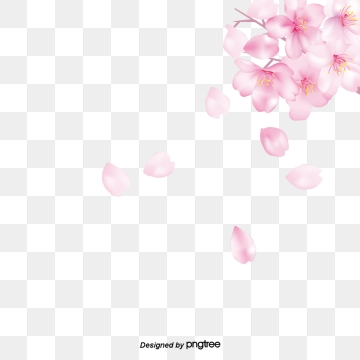 Cherry Blossoms Png, Vector, PSD, and Clipart With Transparent.