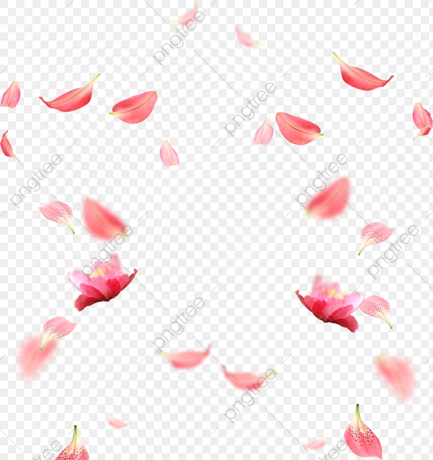 Cherry Blossom Petals Picture Material, Cherry Blossoms, Flowers.