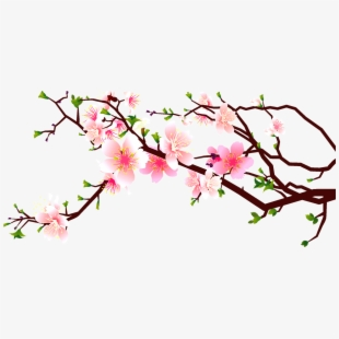 PNG Cherry Blossom Cliparts & Cartoons Free Download.
