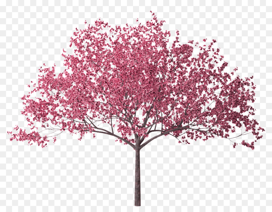 Cherry Blossom Treetransparent png image & clipart free download.