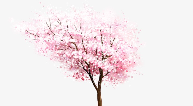 Cherry Blossoms, Tree, Cherry Tree PNG Transparent Clipart Image and.