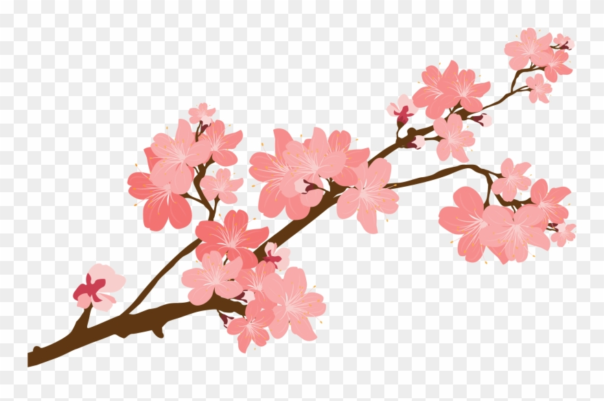 Cherry Blossom Clipart At Getdrawings.