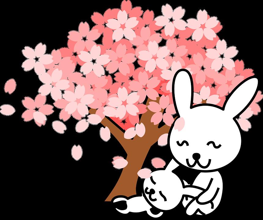 Cherry, Blossom.