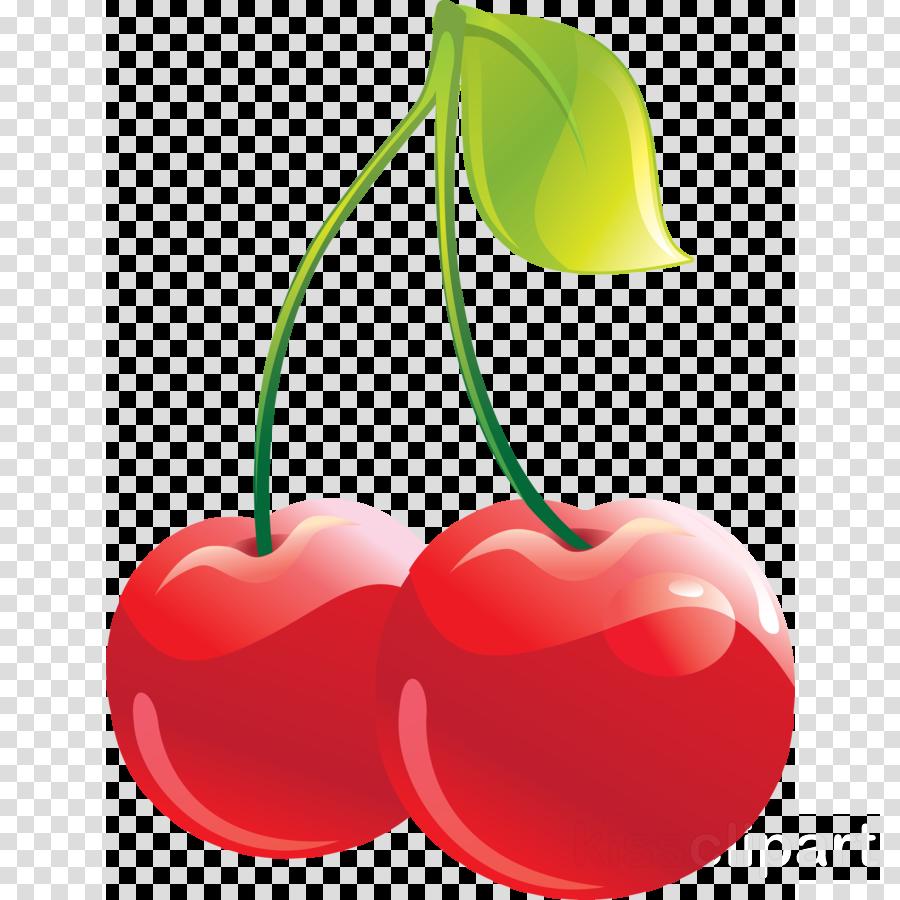 cherry fruit plant clip art drupe clipart.