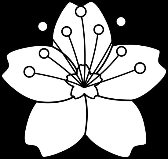 Cherry Blossom Line Art.