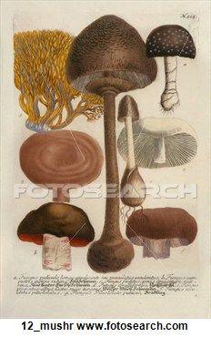 Antique Botanical Illustrations: 1640.