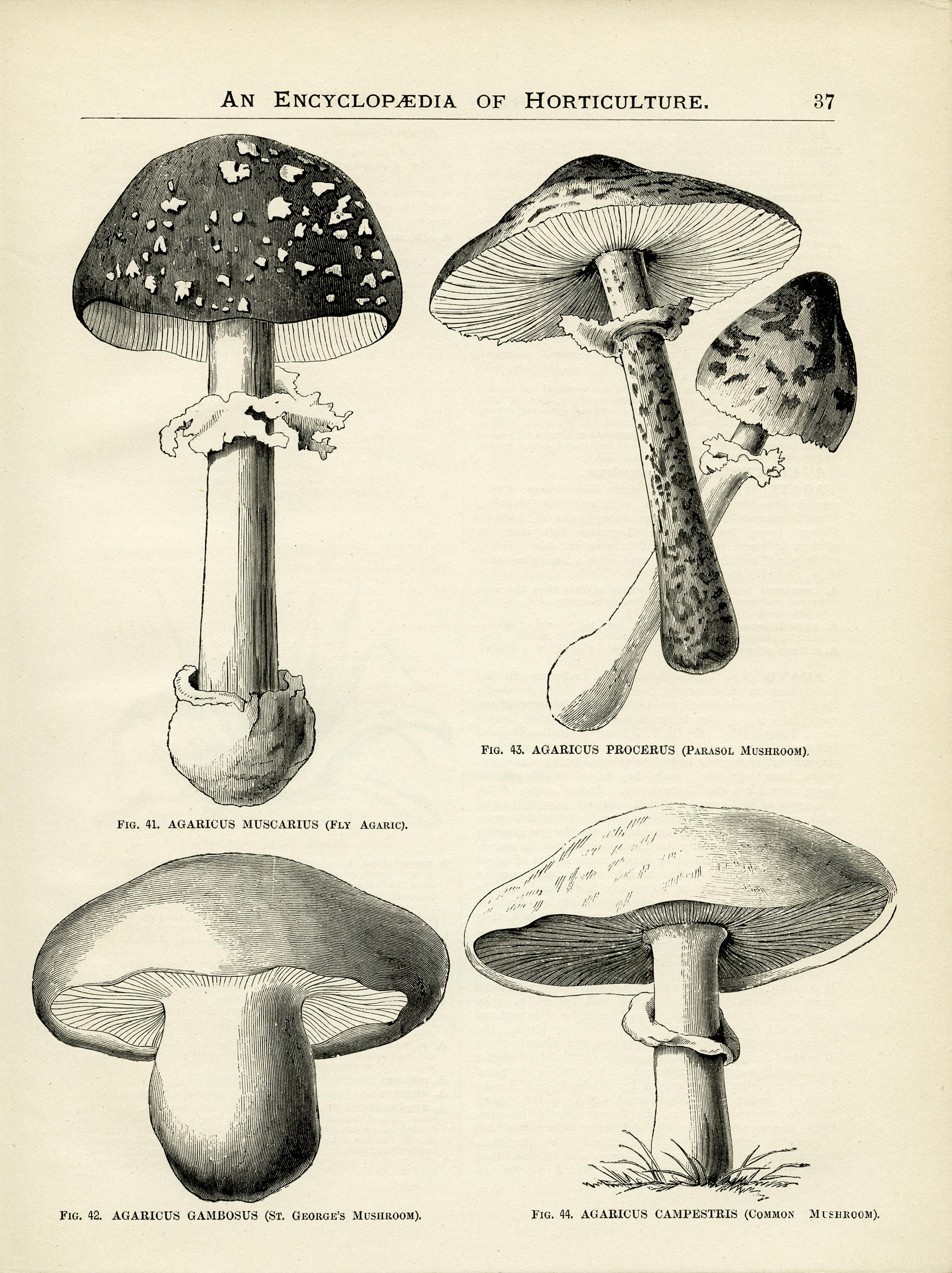 Mushroom Chart.